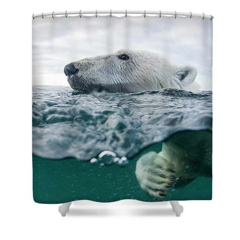 Paw Shower Curtain featuring the photograph Underwater Polar Bear In Hudson Bay by Paul Souders
