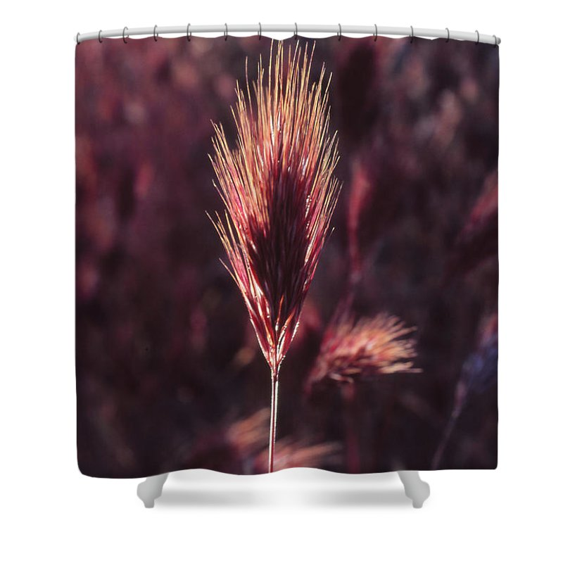 Shower Curtain featuring the photograph Untitled by Randy Oberg