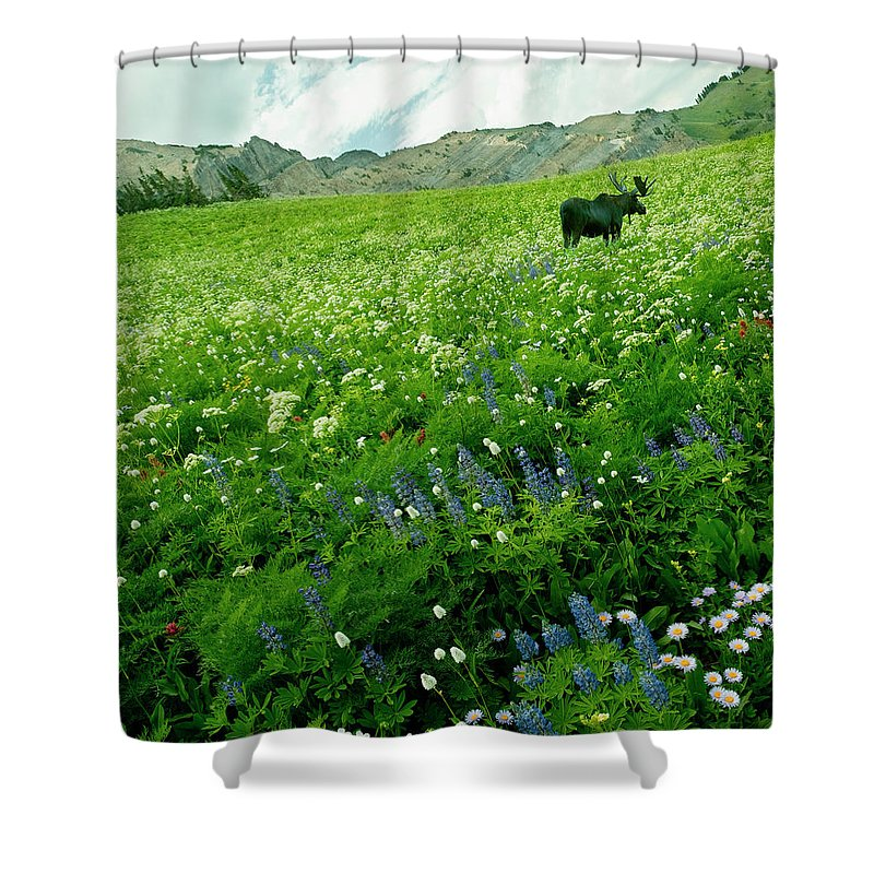 Non-urban Scene Shower Curtain featuring the photograph Usa, Utah, Wasatch National Forest, Mt by John Wang