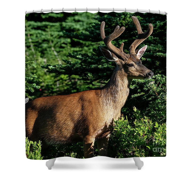 Buck Shower Curtain featuring the photograph Velvet Buck by Mike Dawson