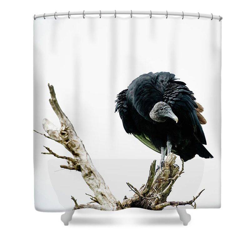 Animal Themes Shower Curtain featuring the photograph Vulture Perched On Tree by Roine Magnusson