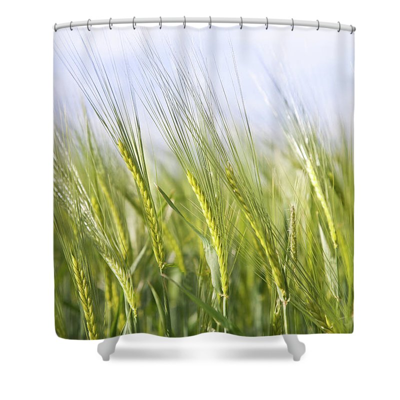 Scenics Shower Curtain featuring the photograph Wheat Field by Peter Chadwick Lrps