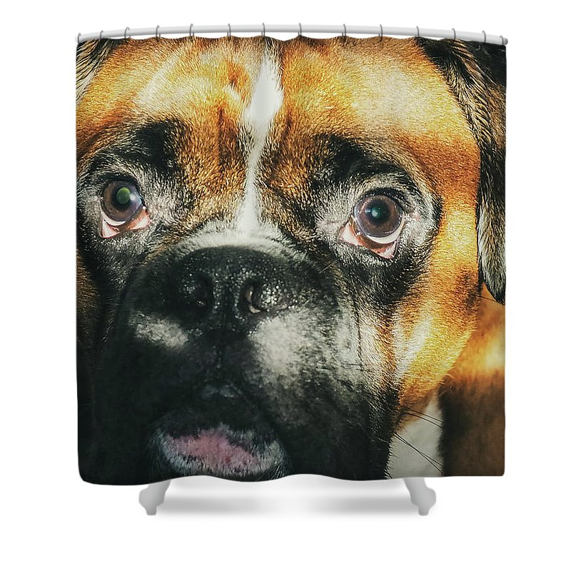 Dog Shower Curtain featuring the photograph Where'd Everybody Go by CWinslow Shafer