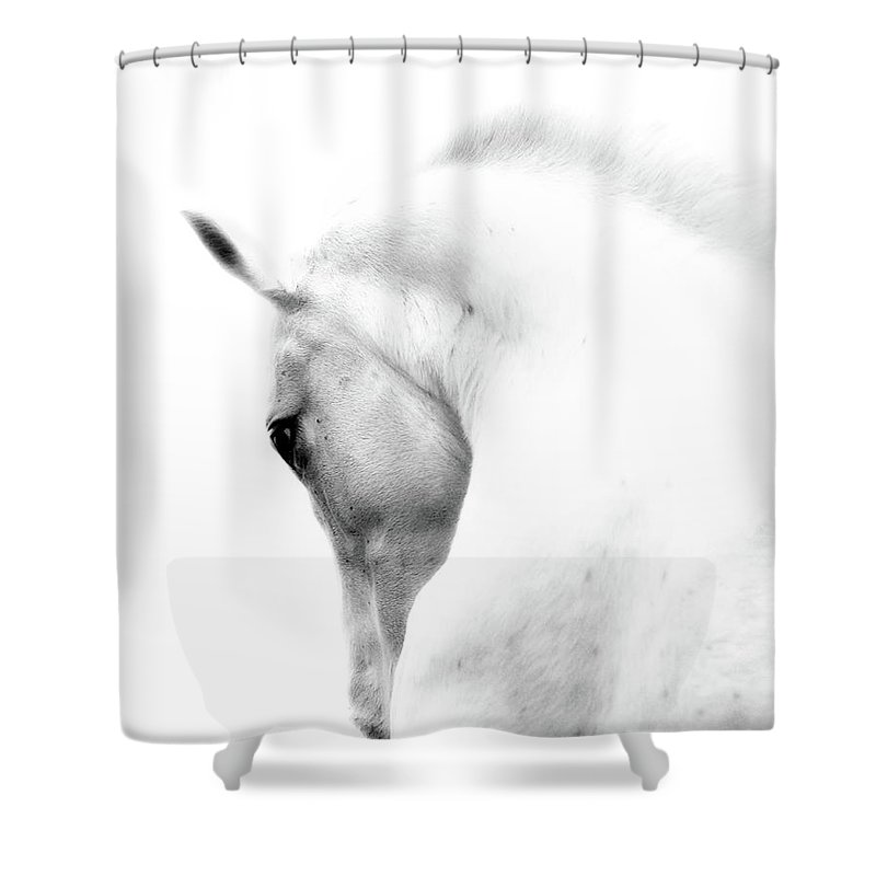 Horse Shower Curtain featuring the photograph White Stallion Andalusian Horse Neck by 66north