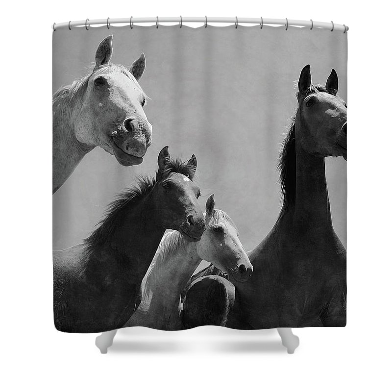 Horse Shower Curtain featuring the photograph Wild Horses Portrait by Antonio Arcos Aka Fotonstudio Photography