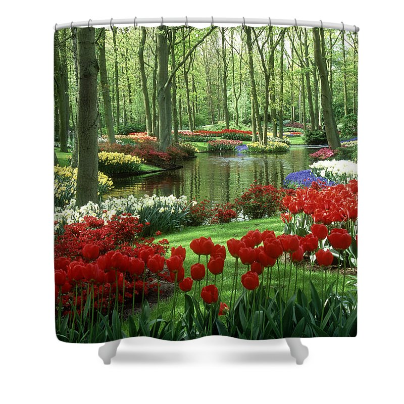 Flowerbed Shower Curtain featuring the photograph Woods And Stream, Keukenhof Gardens by Robin Smith
