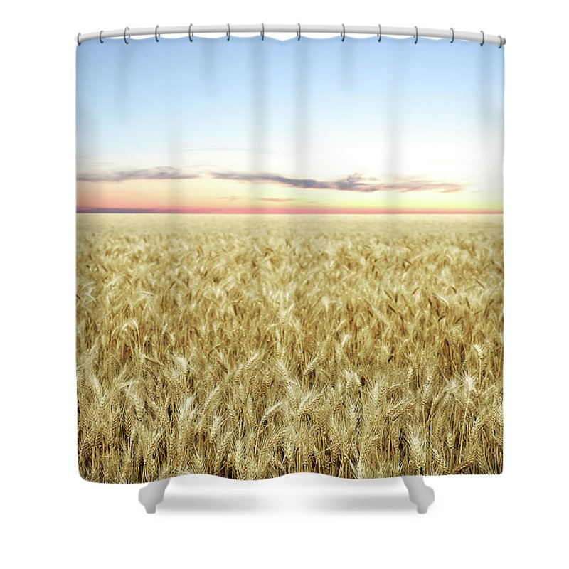 Scenics Shower Curtain featuring the photograph Xxl Wheat Field Twilight by Sharply done