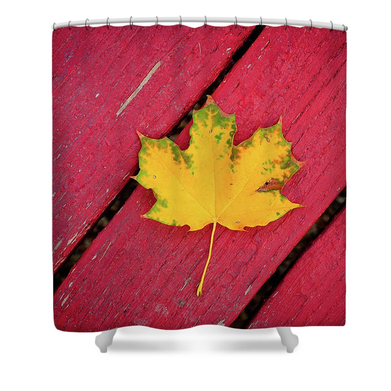 Outdoors Shower Curtain featuring the photograph Yellow Maple Leaf Against A Red Deck by Photo By Sam Scholes