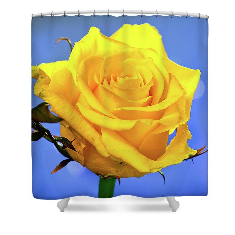 Slovenia Shower Curtain featuring the photograph Yellow Rose by © Karmen Smolnikar