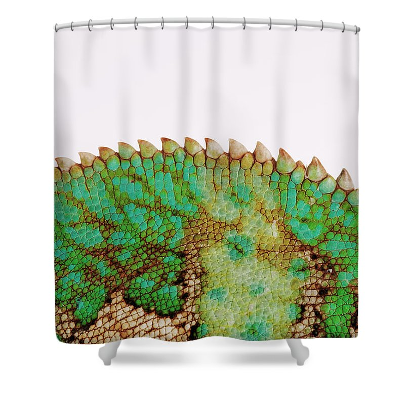 White Background Shower Curtain featuring the photograph Yemen Chameleon, Close-up Of Skin by Martin Harvey