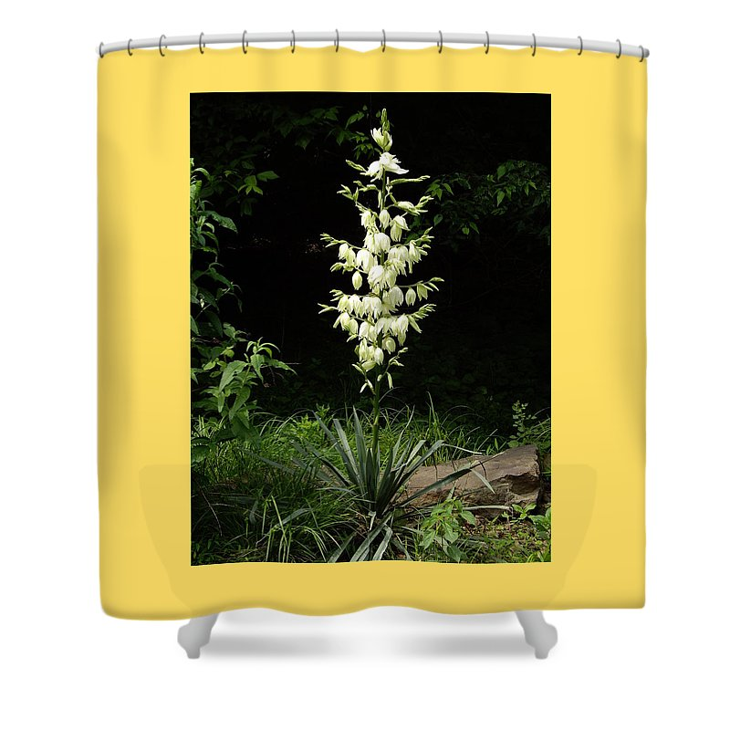 Yucca Shower Curtain featuring the photograph Yucca Blossoms by Nancy Ayanna Wyatt
