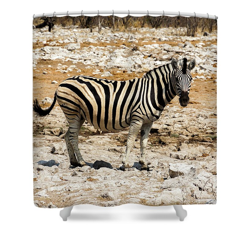 Animal Themes Shower Curtain featuring the photograph Zebra And White Rocks by Taken By Chrbhm