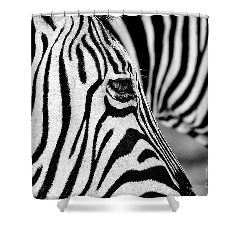 Animal Themes Shower Curtain featuring the photograph Zebra Stripes by Chris Kolaczan