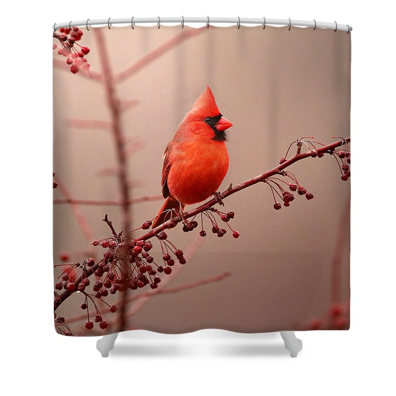 Cardinal Shower Curtain featuring the photograph Bold Beauty by Rob Blair