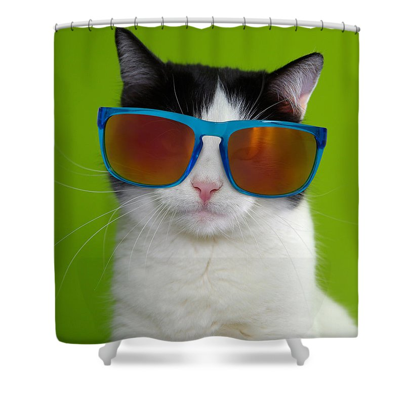 Cat Shower Curtain featuring the photograph Cat wearing sunglasses by Courtney Hall
