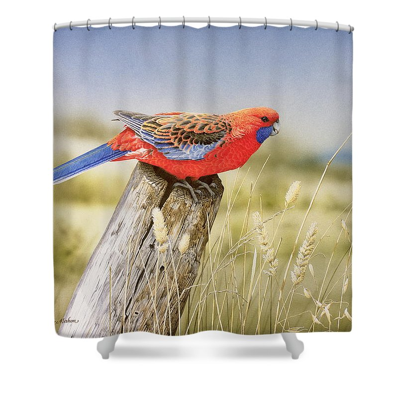 Bird Shower Curtain featuring the painting Colour and Light - Crimson Rosella by Frances McMahon
