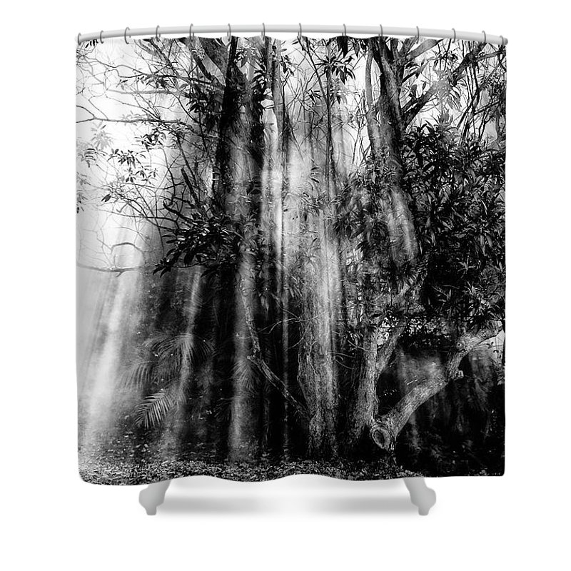 Fall Shower Curtain featuring the photograph Light beams through tree in monochrome by Sheila Smart Fine Art Photography
