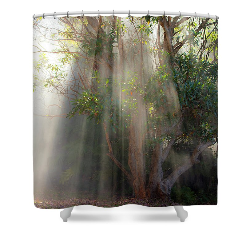 Fall Shower Curtain featuring the photograph Lightbeams through tree by Sheila Smart Fine Art Photography