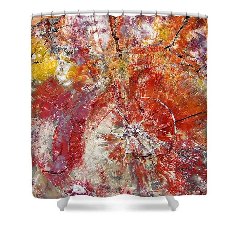 Petrified Wood Stone Texture Abstract Color Skip Hunt Shower Curtain featuring the photograph Painted Desert Wood 1 by Skip Hunt