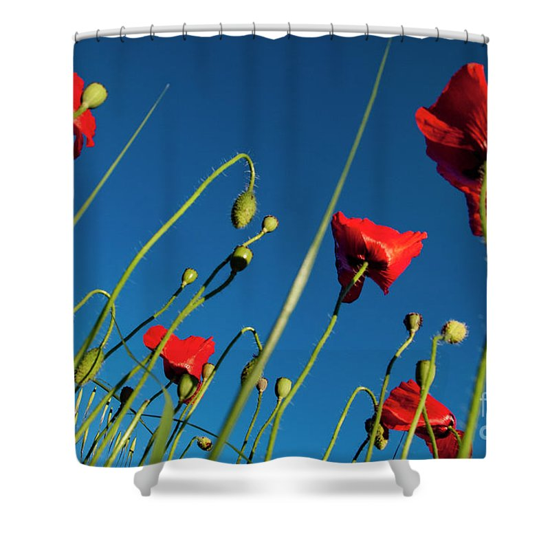 Poppy Shower Curtain featuring the photograph Poppies And Blue by Vicente Sargues