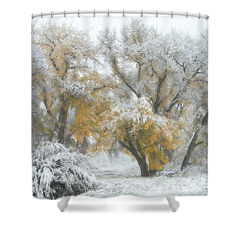 Winter Shower Curtain featuring the photograph Quite Winter Beauty by Zayne Diamond Photographic