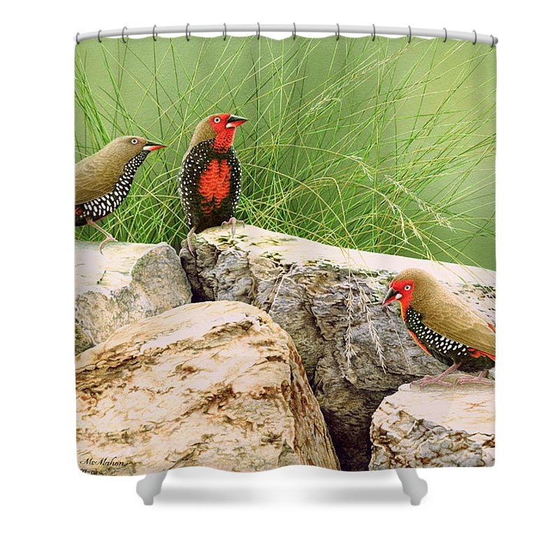 Bird Shower Curtain featuring the painting Rock Stars - Painted Finches by Frances McMahon