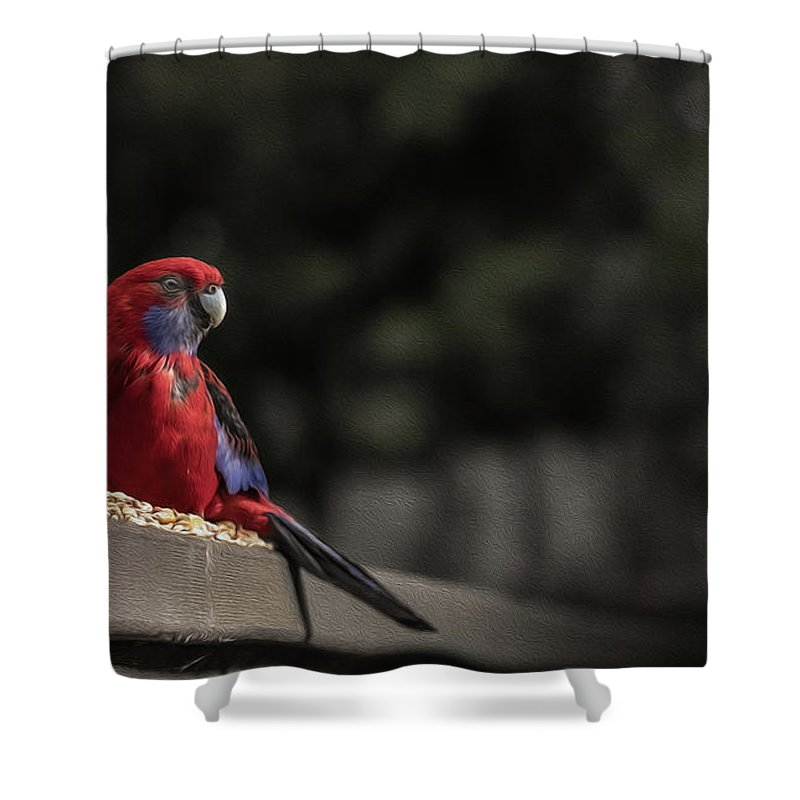 Rosella Shower Curtain featuring the photograph Rosella 1 by Leigh Henningham