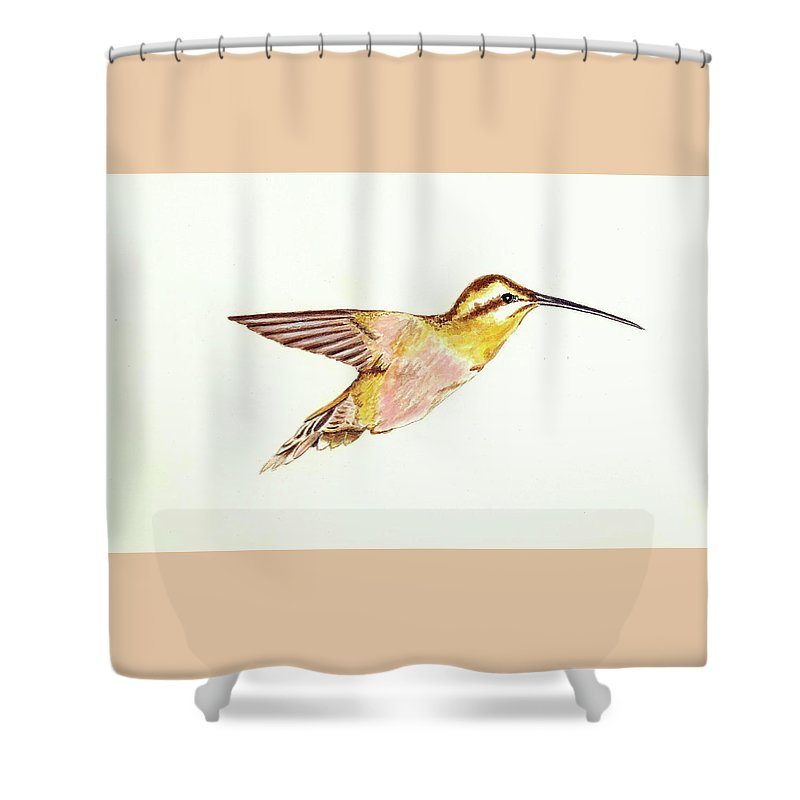 Bird Shower Curtain featuring the painting Rufous Hummingbird by Michael Vigliotti
