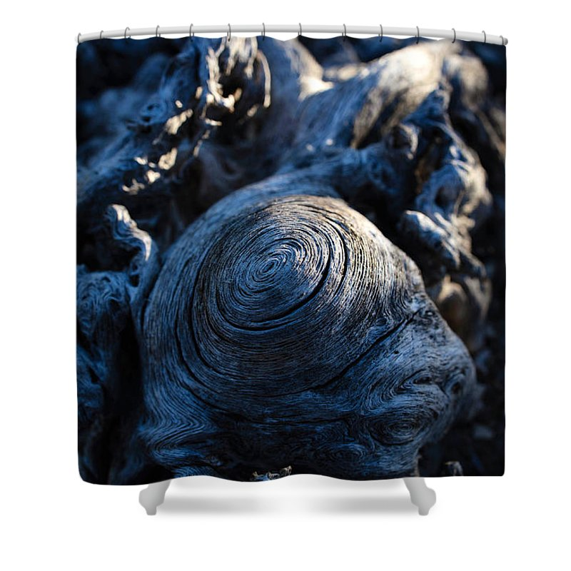 Saguaro Shower Curtain featuring the photograph Saguaro Vortex by Kati Astraeir