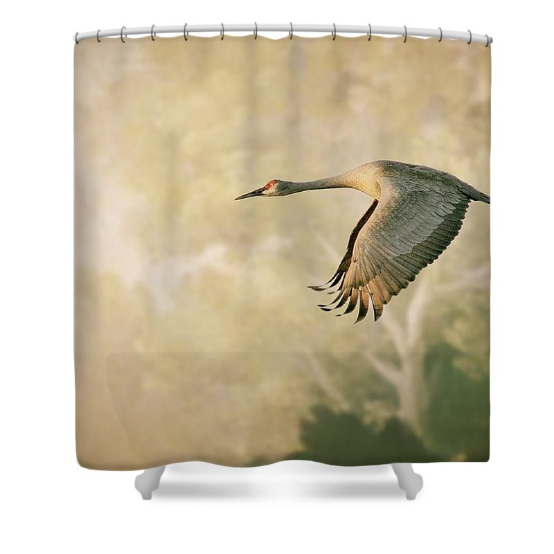 Antique Finish Shower Curtain featuring the photograph Sandhill Crane in Flight by Zayne Diamond Photographic