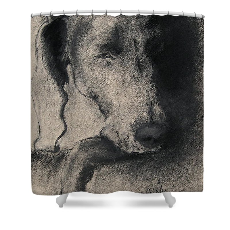 Weimaraner Shower Curtain featuring the drawing Silhouette by Cori Solomon