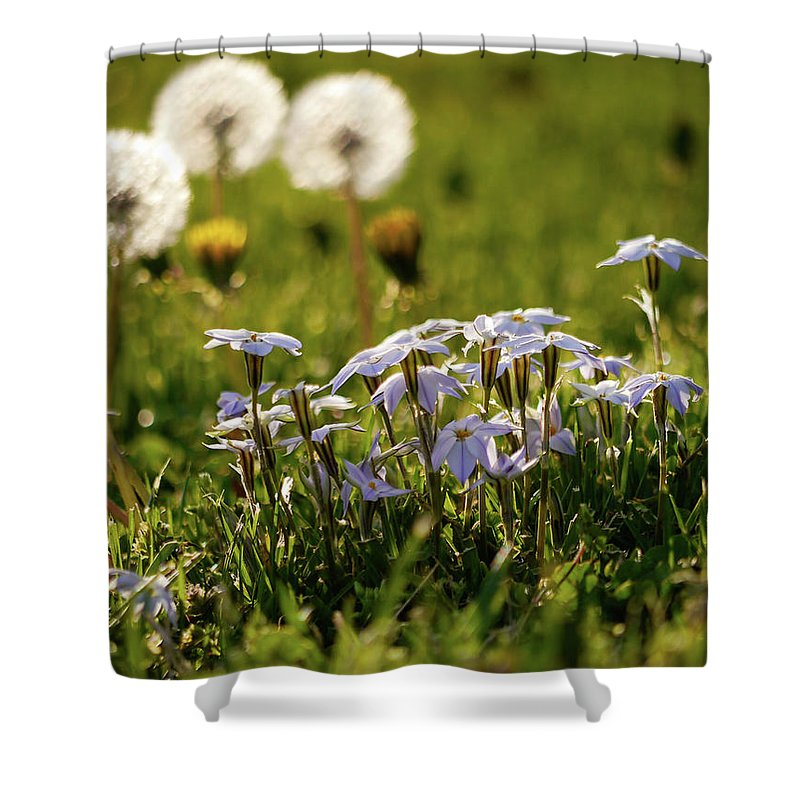 Star Flower Shower Curtain featuring the photograph Stars And Dandelions by Rachel Morrison