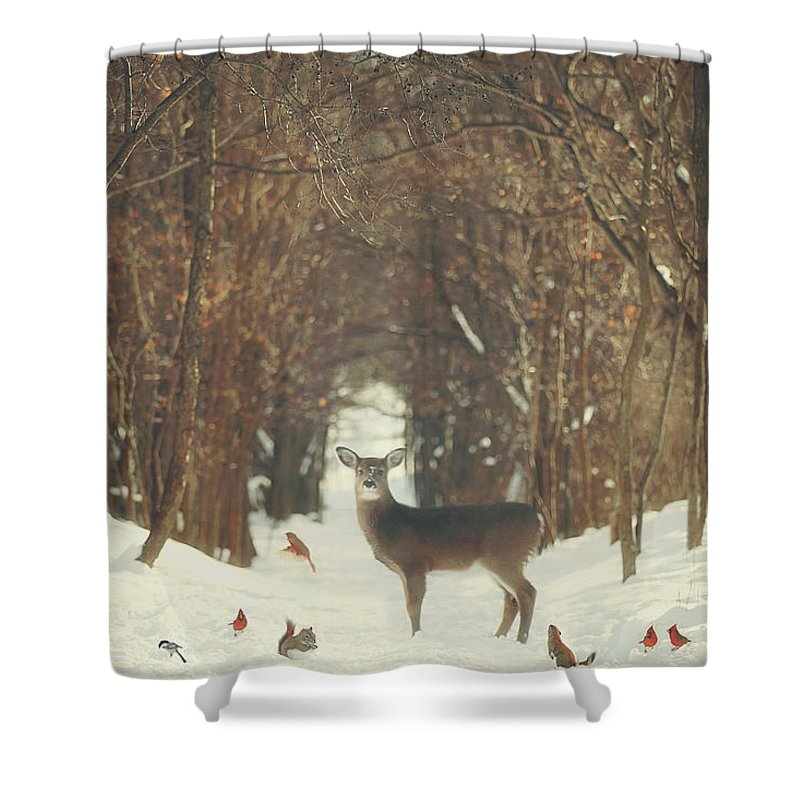 Snow Shower Curtain featuring the photograph The Forest of Snow White by Carrie Ann Grippo-Pike