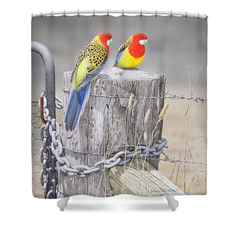 Bird Shower Curtain featuring the painting Waiting for the Rains - Eastern Rosellas by Frances McMahon