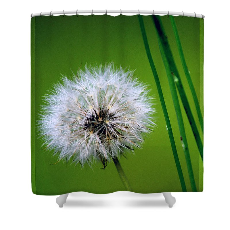Dandelion Shower Curtain featuring the photograph Waiting for the Winds of Deliverance by Holly Kempe