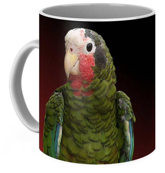 Studio Dalio - Cuban Amazon Parrot Ceramic Mug
