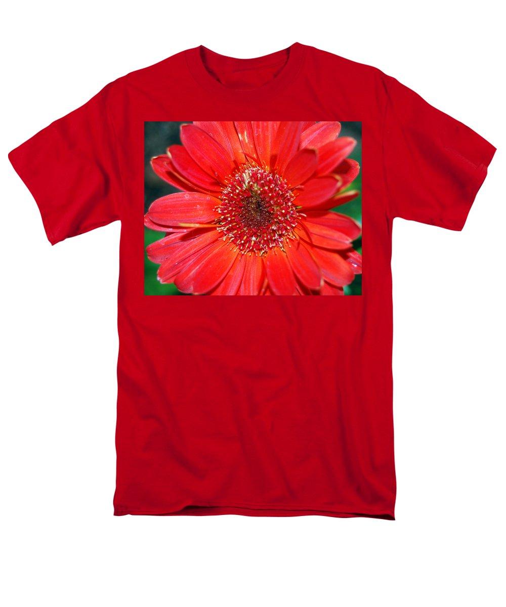 Gerber Men's T-Shirt (Regular Fit) featuring the photograph Red Gerber Daisy by Amy Fose