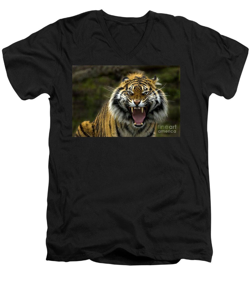 Tiger Men's V-Neck T-Shirt featuring the photograph Eyes Of The Tiger by Mike Dawson
