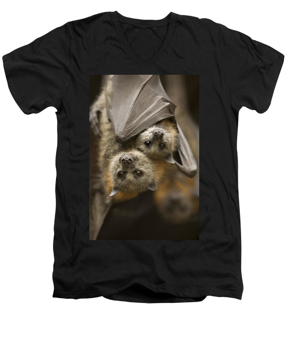 Bats Men's V-Neck T-Shirt featuring the photograph Hang In There by Mike Dawson