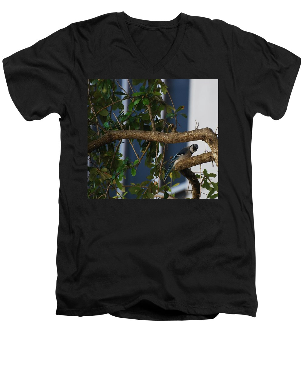 Birds Men's V-Neck T-Shirt featuring the photograph Blue Bird by Rob Hans