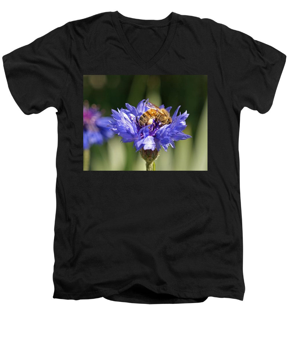 Bee. Flower Men's V-Neck T-Shirt featuring the photograph Bachelor Button And Bee by Heather Coen