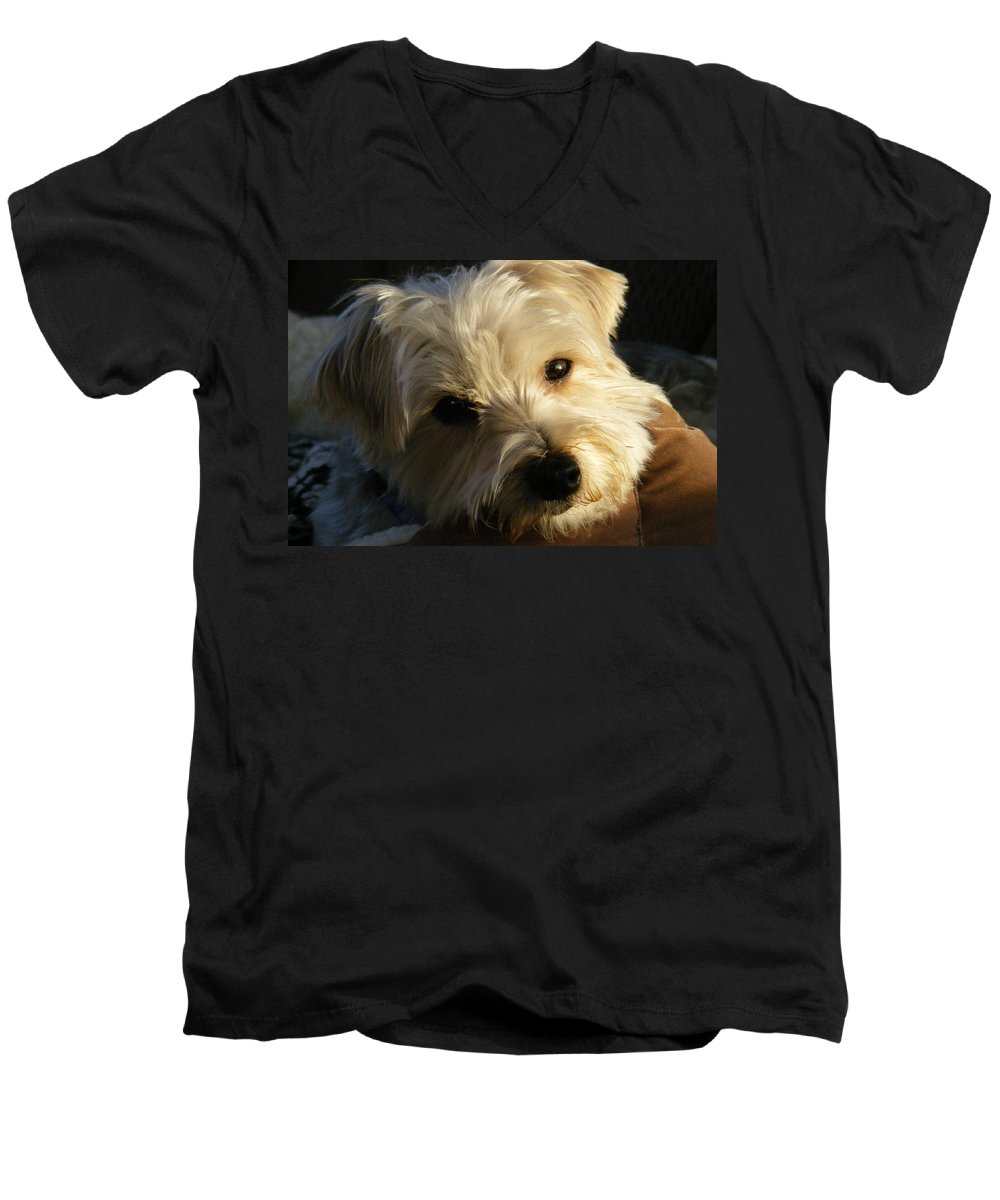 Dog Men's V-Neck T-Shirt featuring the photograph Charlie by Ed Smith