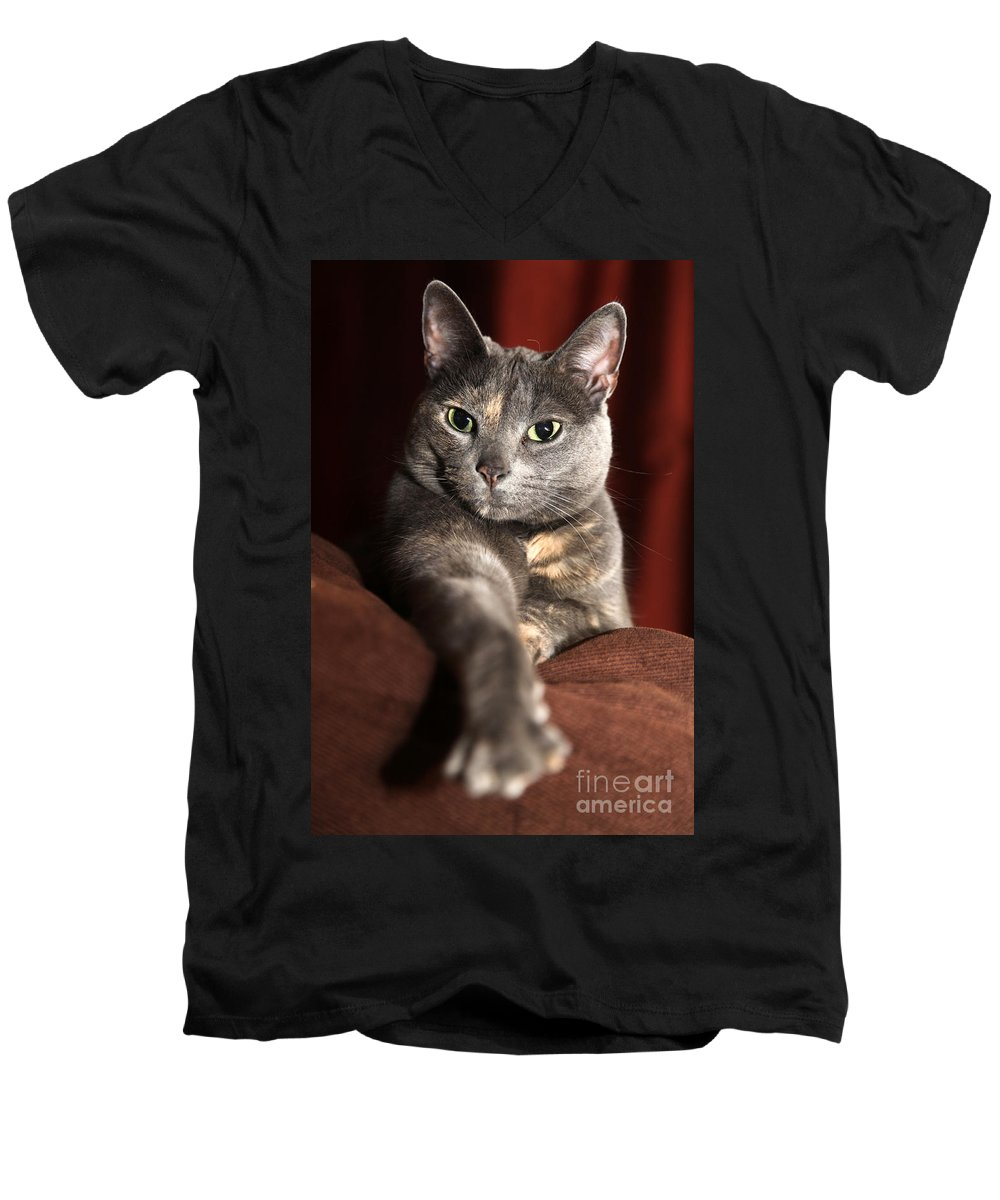 Kitty Men's V-Neck T-Shirt featuring the photograph Come Here by Amanda Barcon