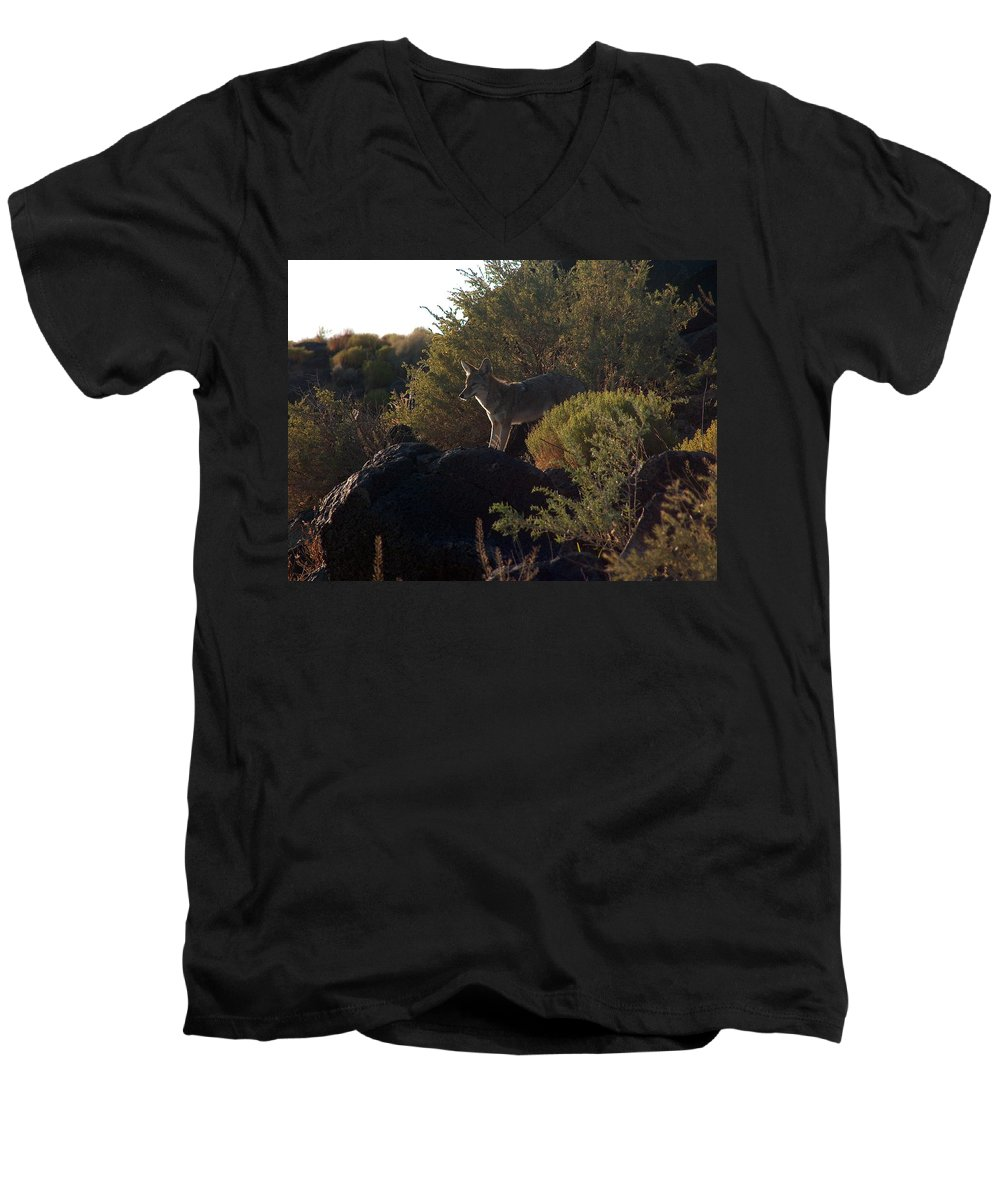 Coyote Men's V-Neck T-Shirt featuring the photograph Coyote At The Petrogyphs 2 by Tim McCarthy
