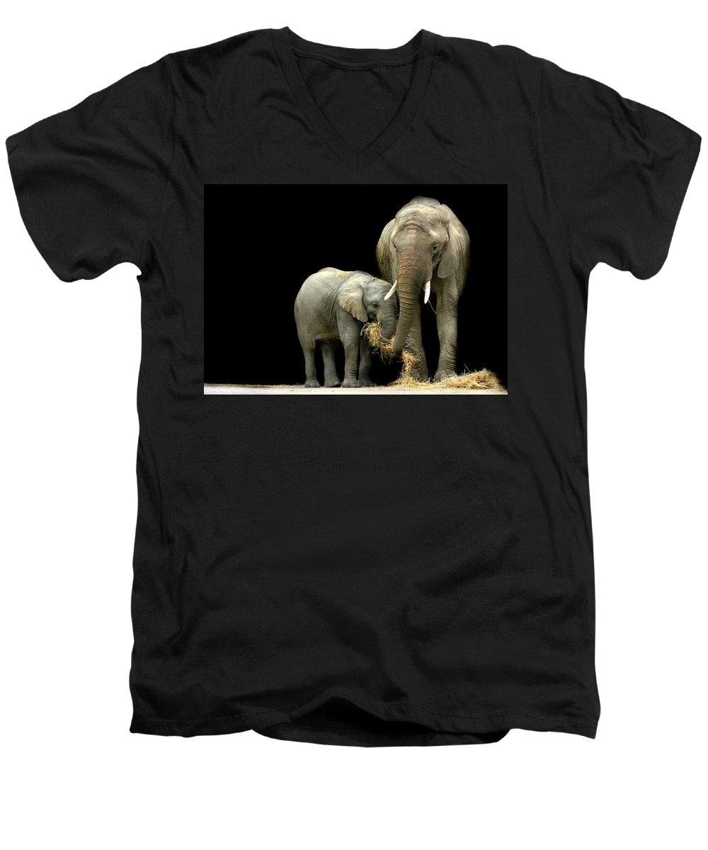 Elephant Men's V-Neck T-Shirt featuring the photograph Feeding Time by Stephie Butler
