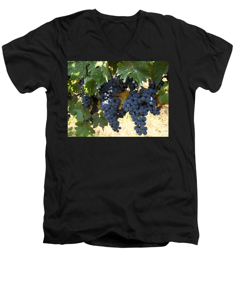 Grapes Men's V-Neck T-Shirt featuring the photograph Harvest Time by Gale Cochran-Smith