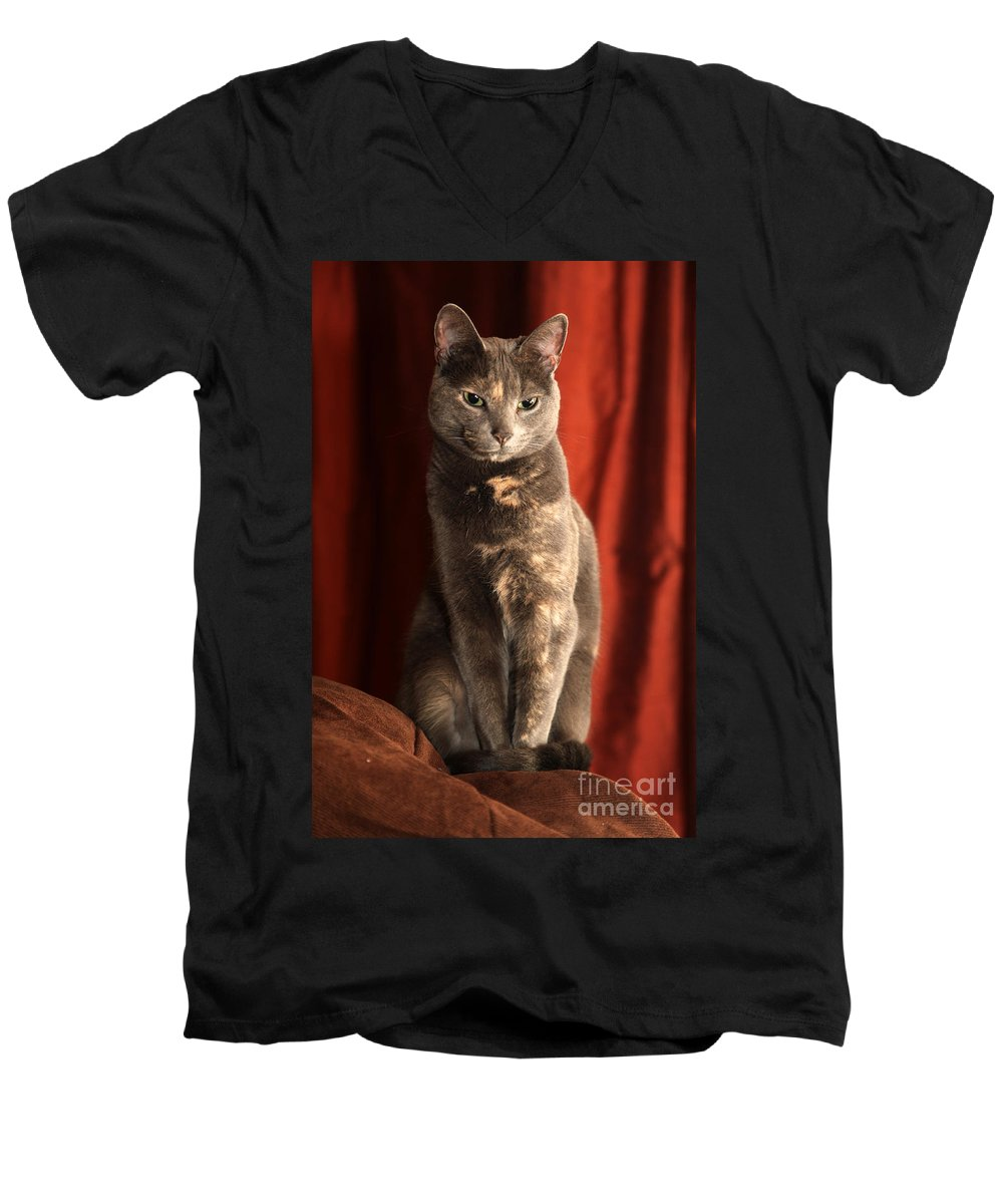 Cat Men's V-Neck T-Shirt featuring the photograph Mollie by Amanda Barcon