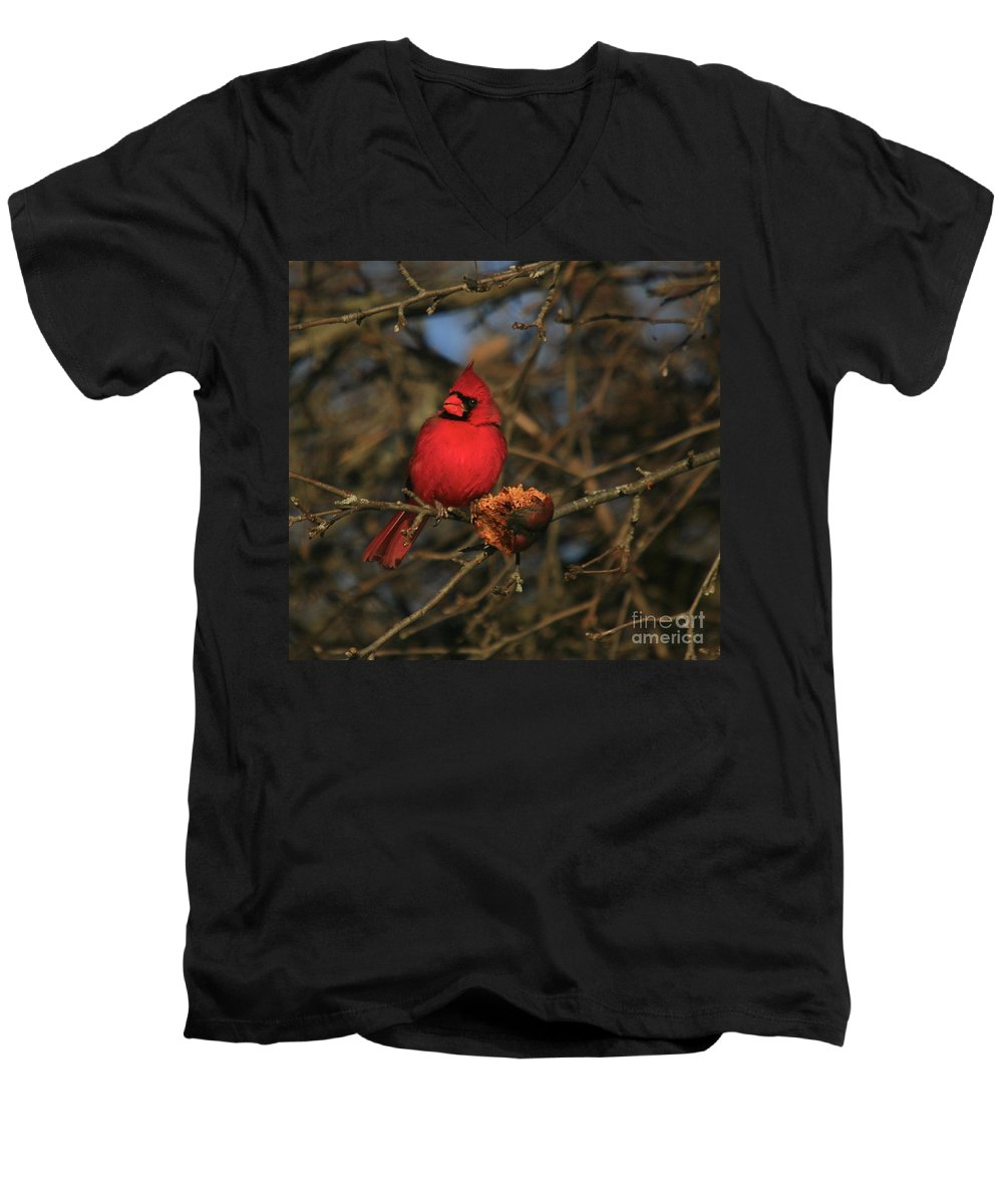 Bird Men's V-Neck T-Shirt featuring the photograph Out On A Limb by Robert Pearson