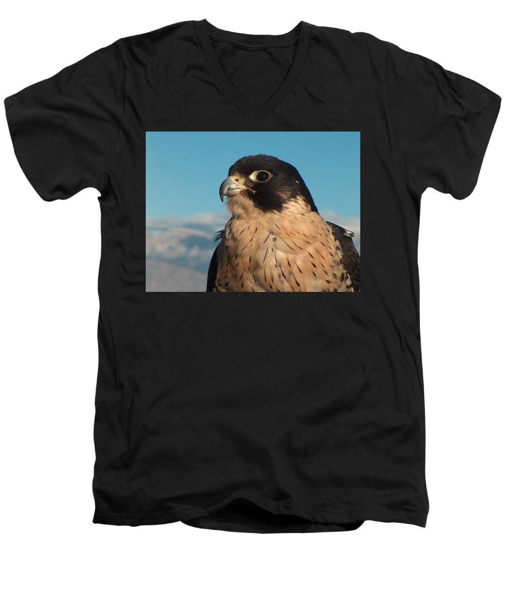Peregrine Falcon Men's V-Neck T-Shirt featuring the photograph Peregrine Falcon by Tim McCarthy