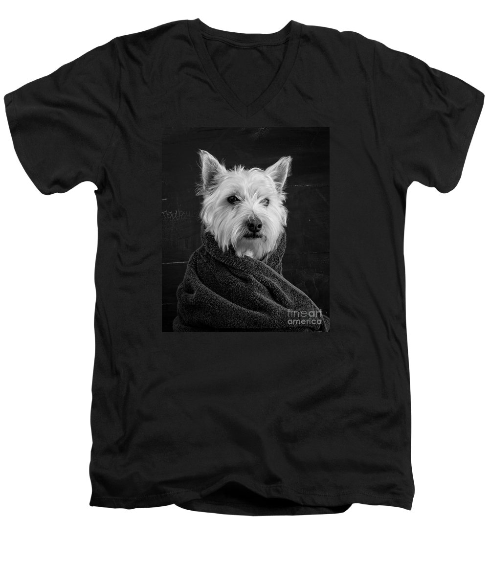 Portrait Of A Westie Dog Men's V-Neck T-Shirt featuring the photograph Portrait Of A Westie Dog by Edward Fielding